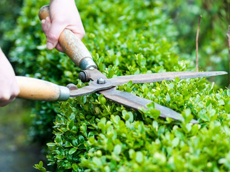 Pruning-and-hedging-1080x800